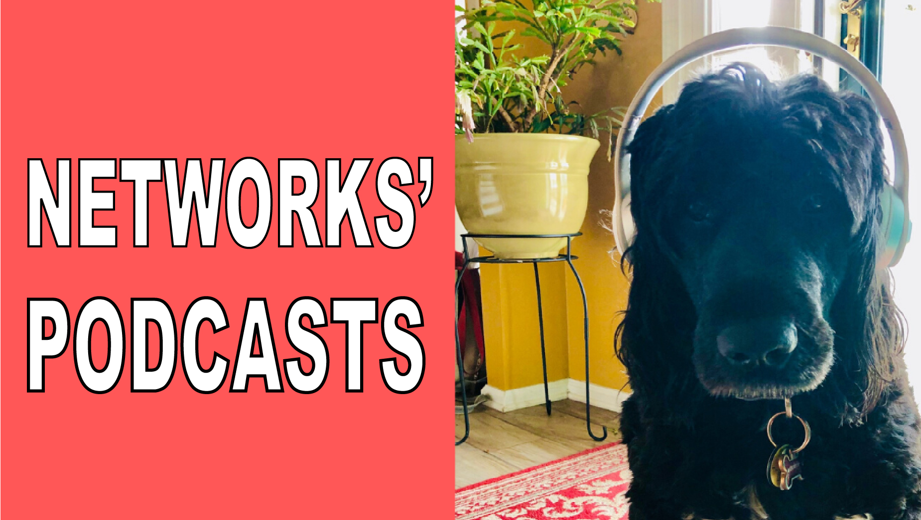 Networks Podcasts - image of dog wearing headphones